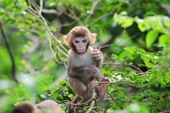 Baby monkey at golden hill, hong kong Stock Photo