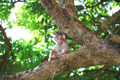 Baby monkey at golden hill, hong kong Stock Photography