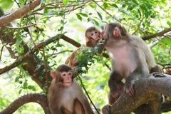 Baby monkey at golden hill, hong kong Royalty Free Stock Image