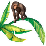 Baby Monkey Gorilla on palm tree leaves Stock Image