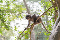 Baby monkey is hanging on the tree Royalty Free Stock Images