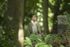 Baby Monkey infant stock photos