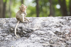 Baby monkey looking down something. Royalty Free Stock Photos
