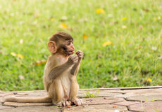 Baby Monkey in the park.  royalty free stock image