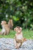 Baby monkey Royalty Free Stock Photos