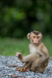 Baby monkey. Is sitting alone royalty free stock images