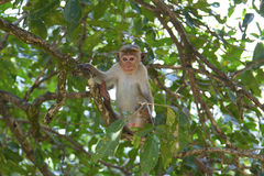 Baby monkey Stock Photos