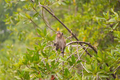 Baby monkey sitting on branches Stock Photography