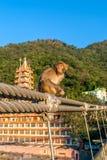 Baby monkey sitting on the fence of the bridge in Rishikesh, India. stock images