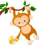 Baby monkey on a tree Stock Photos