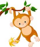Baby monkey on a tree. Cute baby monkey on a tree holding banana Stock Photos