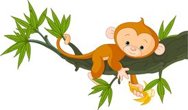 Baby monkey on a tree. Cute baby monkey on a tree holding banana Stock Images