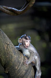 Baby Monkey on Tree Royalty Free Stock Photo