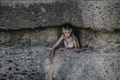 Baby Monkey. This baby try to call their mom Stock Photo