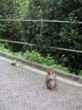 Baby Monkey. Wild baby monkey looking innocent Stock Photography
