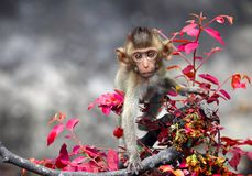 Baby monkeys cute Staring. royalty free stock photo