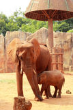 A baby and mother african elephant Stock Photos