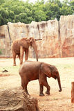 A baby and mother african elephant Royalty Free Stock Photo