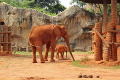 A baby and mother african elephant Stock Image