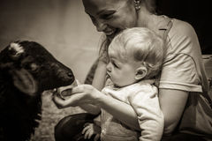 Baby with mother feeding animal at the petting zoo. Baby Baby curiously looking at animal stock images