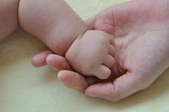 Baby and mother hands 2184. Hands touch between chinese mother and baby show family and love Royalty Free Stock Photo