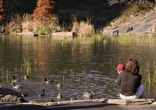 Baby and mother looking at ducks Stock Photo