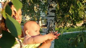 Baby on the mother's hands playing with tree branches stock footage
