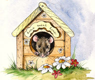 Baby mouse Royalty Free Stock Photography