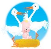Baby Nestling Stock Photography