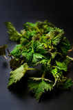 Baby nettle. Bunch of fresh spring nettle on black background Royalty Free Stock Photos
