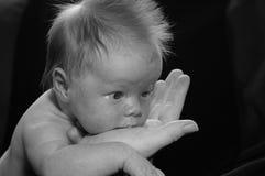 Baby newborn royalty free stock image