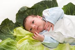 Baby newborn in cabbage leaves Royalty Free Stock Images