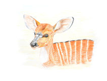 Baby nyala. A baby nyala crayon painting Royalty Free Stock Photography