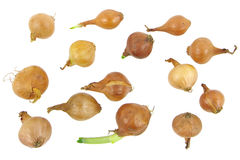 Baby onions Royalty Free Stock Photography
