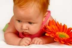 Baby Orange Stock Photos