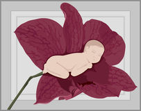 Baby Orchid Royalty Free Stock Photo