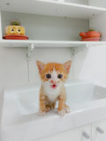 Baby orphan cat Royalty Free Stock Images