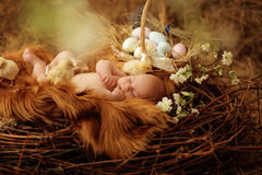 Baby in Ostern-Nest stockfotos