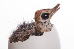 Baby Ostrich in Egg Stock Photo