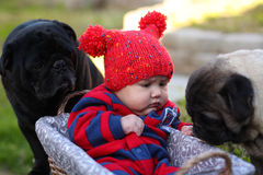 Baby outdoors with pugs. A sweet, precious baby of three months of age is in a basket outdoors. He is watching a pug dog while another pug looks on. Baby is stock photography