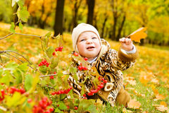 Baby over yellow leaves Stock Images