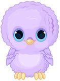 Baby Owl Royalty Free Stock Photo
