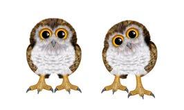 Baby owl Stock Image