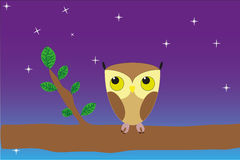 Baby owl Royalty Free Stock Images