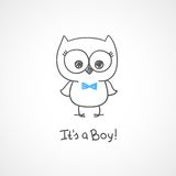 Baby owl Stock Photos