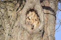 Baby owls in tree Stock Photos