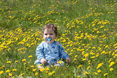 Baby with pacifier sits on beautiful meadow Stock Photography