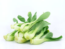 Baby pak choi Royalty Free Stock Photography