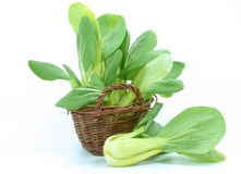 Baby pak choi Royalty Free Stock Images
