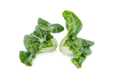 Baby pak choi on a white background.  Stock Image
